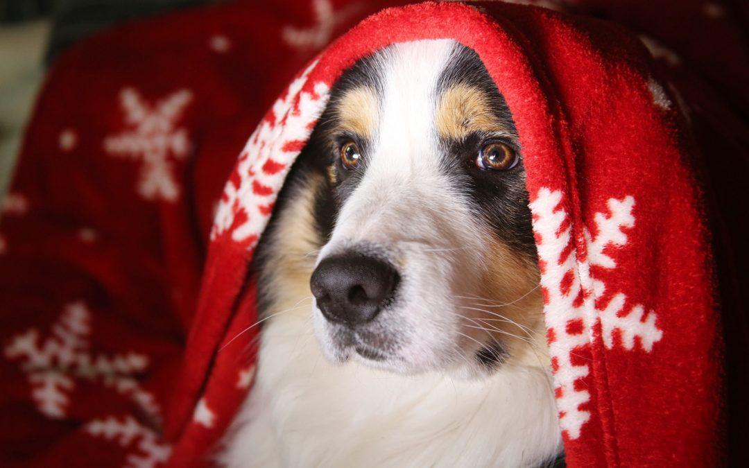 """The """"Twelve Pet Hazards of Christmas"""""""